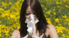 Great Tips That Will Give You Some Allergy Relief – Okulista Wroclaw